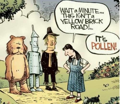 wata-minute-this-icnta-yellow-brick-road-pollen-14457509